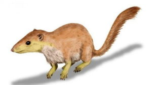 One-of-the-earliest-mammals-Purgatorius-unio-624x351